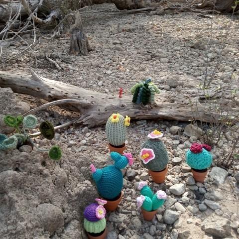 Wolllige cactussen